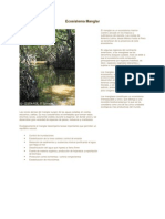 Ecosistema Manglar