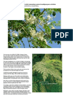 The Miracle Tree With Tremendous Natural Multipurpose Activities