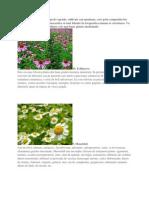 Top 10 Plante Medicinale