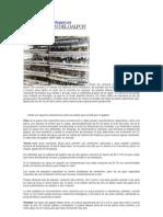 Notas Proyecto Codorniz