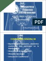 ANATOMIA SEMANA 08 [Modo de Compatibilidad]