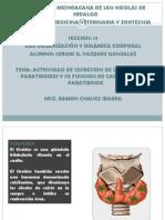 Actividad de La Glandula Paratiroides