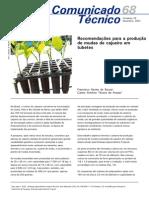 Recomendações para produção de mudas de cajueiro em tubetes