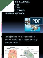 Diapositivas Exposicion Grupo 3
