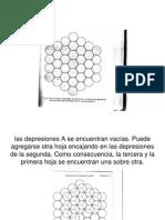 Estructura Morfologica Del Diente