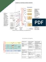 6MM4 Medicamentele Sistemului Nervos Vegetativ I Xp
