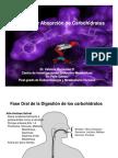 Matalobismo de Carbohidratos