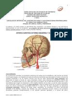 Circulacion Arterial y Venosa Del Sistema Dentario y Estructuras Perimaxilares