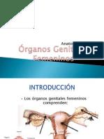 expo anatomia gine 2.pptx