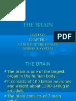 The Brain by Gary J 5sn109