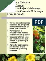 Aji Calabaza Flyer