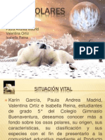 osospolarestrabajofinal-090710090730-phpapp02