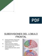 Funciones Cognitivas Del Lobulo Frontal Presentacion
