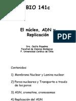 Clase+7+ +Nucleo%2C+ADN+y+Replicacion+2013