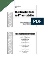 Gene Lecture 11 Transcription
