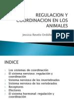 Regulacion y Coordinacion de Los Animales