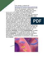 3d-ciclocelularymitosis-130420212432-phpapp01