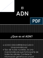 ADN (1) p