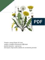 Agroecologia Macarena Campos