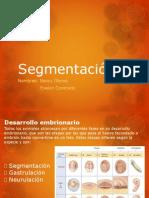 Segmentación Holoblástica y Meroblástica 2