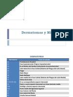 Dermatomas y Miotomas (1)