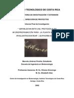Bjfib200331 Chanca Piedra