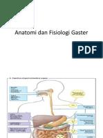 Anatomi Dan Fisiologi Gaster
