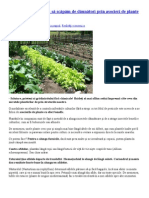 Agricultură ecologică-sa scapam de daunatori prin asocieri de plante