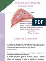 Horrmônios da Suprarrenal- fisiologia.pptx