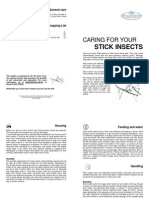 Caring for Your Stick Insects