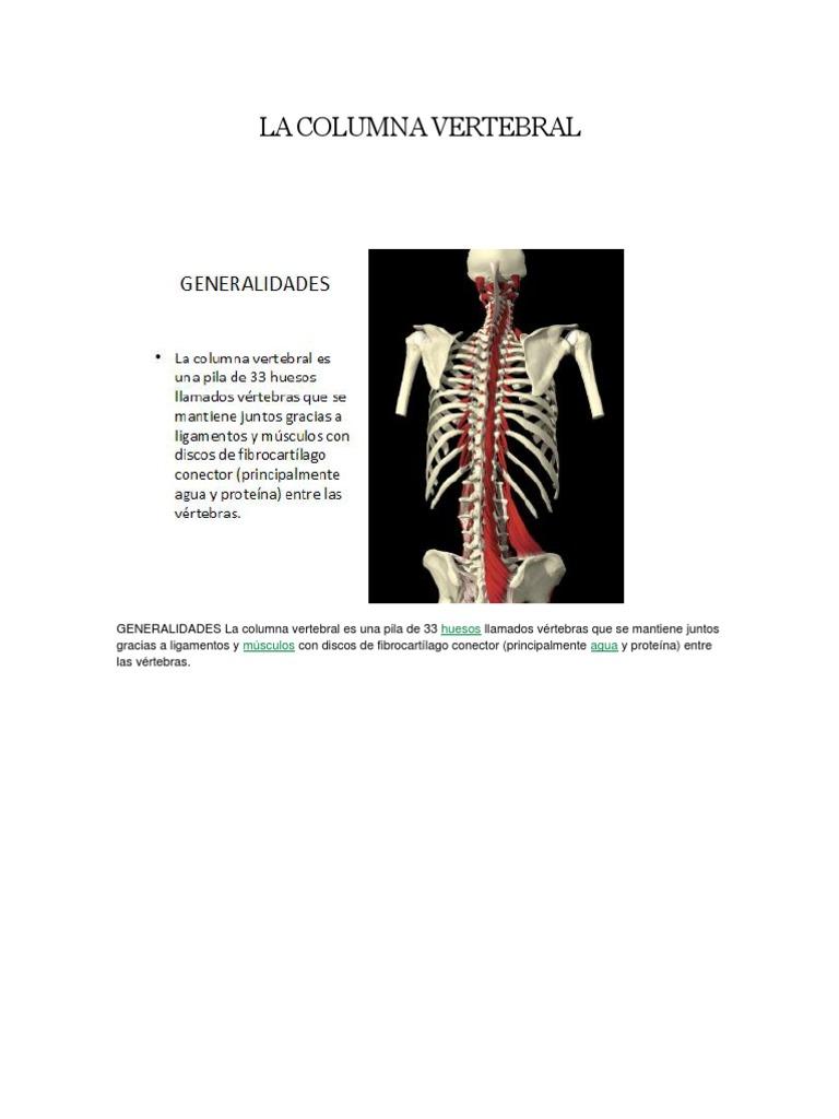 LA COLUMNA VERTEBRAL.pdf