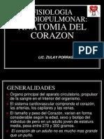 Anatomia Del Corazon y Circulacion Sanguinea (1)