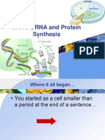 3. DNA, RNA and Protein Synthesis