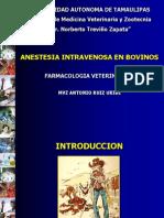 Anes Bovinos Def