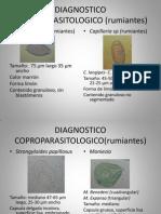 DIAGNOSTICO COPROPARASITOLOGICO