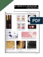Microbiology Colour Plate No.1