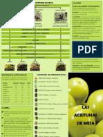 Folleto Aceituna Mesa_tcm5-533