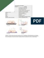 Nclex Graphics/Mneumonics
