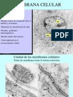 membrana-celular-1232930787075128-1