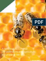 JN446 - Bees in Decline