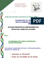 Ac Nucleicos Andre %283%29