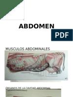 Anatomia II Abdomen - III Fase
