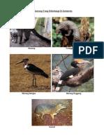 5 Binatang Yang Dilindungi Di Indonesia