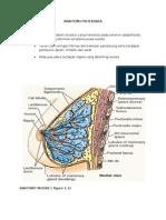 anatomi & histologi (payudara)
