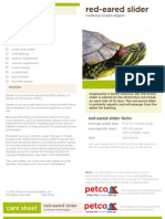 Red Eared Slider Care Guide