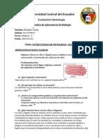 Info 11