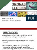 Plesiomonas Shigelloides Expo