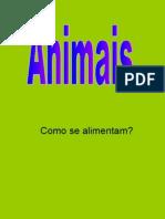 Alimentação animais