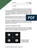 6-3S-Diferenciación celular.pdf