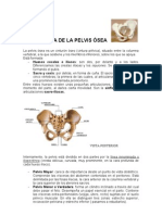 ESTRUCTURA+DE+LA+PELVIS+ÓSEA